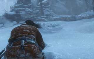 Как убить медведя в Rise of the Tomb Raider?