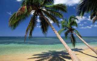 Кокосовая пальма в ArcheAge и где найти её саженец