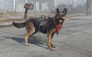 Как одеть спутника в Fallout 4?
