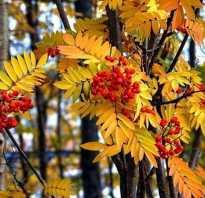 Баговая осень – что, как и почему?